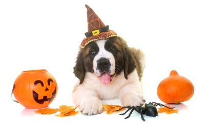 Northwest Indiana Pet Events during October 2018