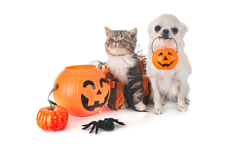 Northwest Indiana Pet Events during October 2018 - The Pet