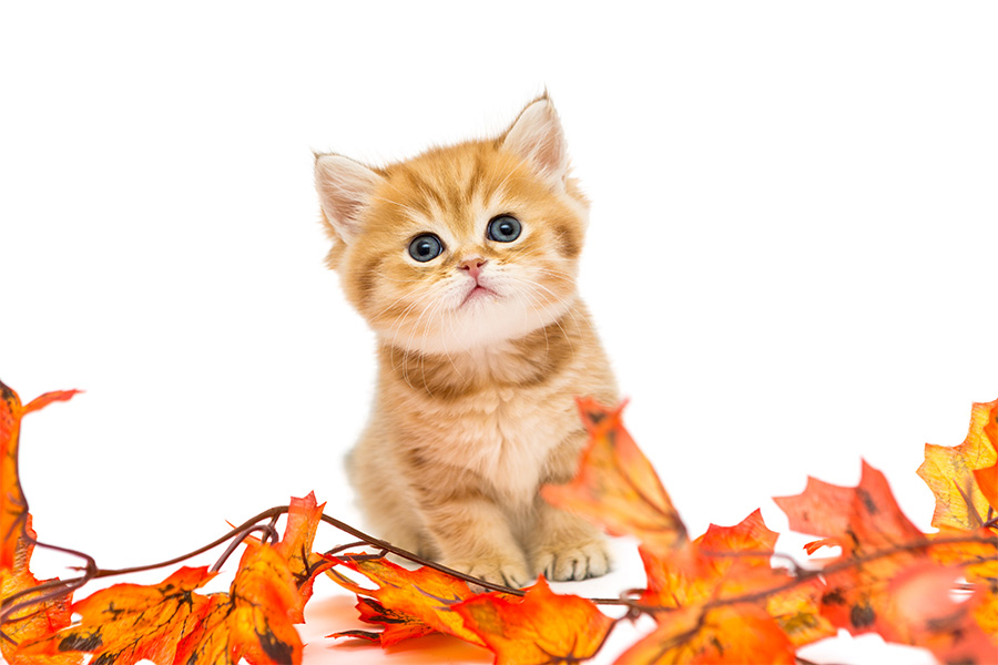 Northwest Indiana Pet Events (November)