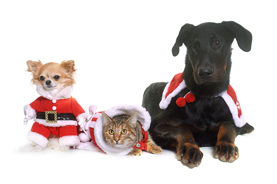 Fun Pet-Related Events To Do Around Northwest Indiana In December