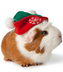 Fun Pet-Related Christmas Events To Do Around Northwest Indiana In December