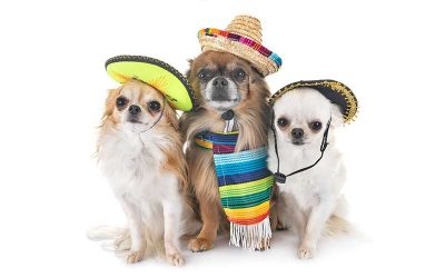 CRAZY Fun Happening for Local Pet Lovers In May
