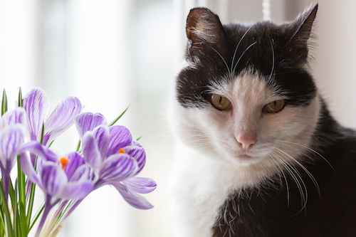 cat rescuers documentary