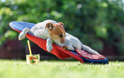Fun Pet Events Happening In July Around Northwest Indiana!
