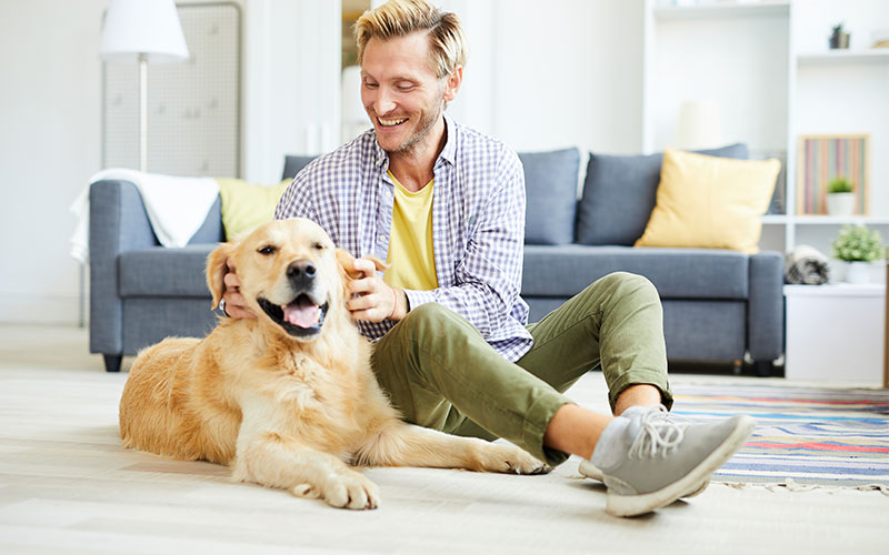 7 Ways To Show Thanks For Your Dog or Cat