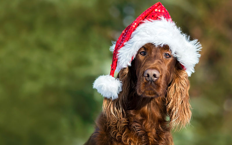 Way Cool December Pet-related Events You HAVE To Check Out!!