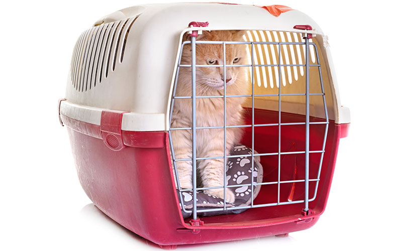 Here's how to safely travel with your pet