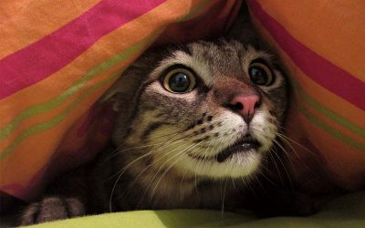 Let The Cat Out Of The Bag?  Don't Let Them In To Begin With!