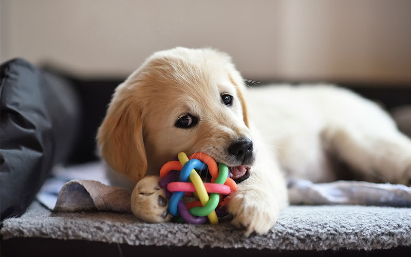 Choosing The Best Toy For Your Dog
